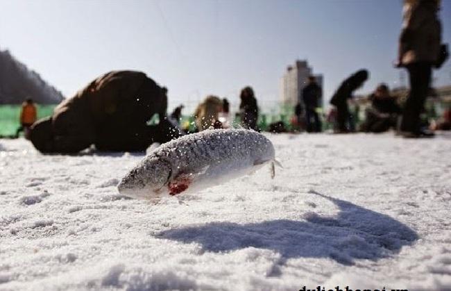 Image result for Lễ hội câu cá hồi