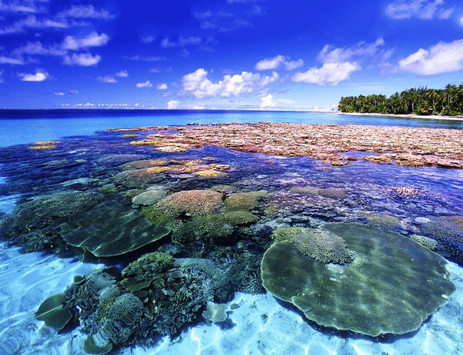 Kết quả hình ảnh cho đảo san hô koh larn