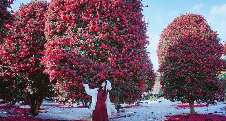 10 địa điểm du lịch Hàn Quốc mùa đông( tháng 12,1,2) có thể khiến bạn say mê